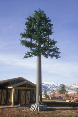 45 ft 2 Branch Monopine